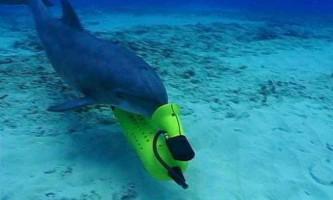 Дельфіни допомогли створити радар для виявлення вибухових пристроїв