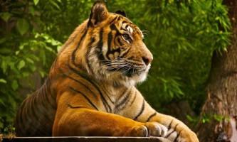 День тигра відзначили ходою у владивостоці