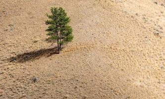 Дерева в умовах посухи видають звуки