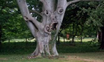 Дерево з `` зачарованого `` лісу