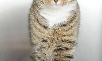 Що впала з 36-метрової висоти кішка відбулася зламаним зубом