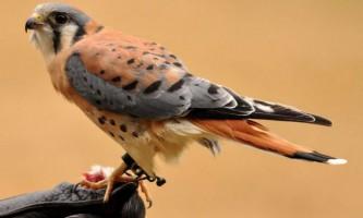 Десять найкрасивіших птахів нашої планети