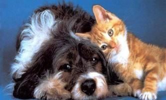 Десять найпопулярніших екзотичних домашніх тварин