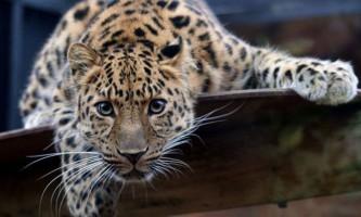 Десять найрідкісніших тварин на землі