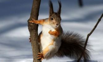 Десять дивних фактів про білках, про які ви не знали