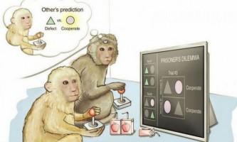 Дитинчата мавп ростуть швидше, щоб не стати жертвами дорослих