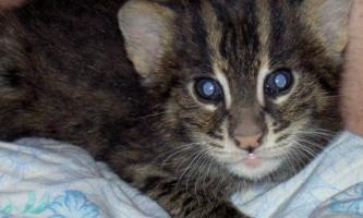 Дитинство кота-рибалки на прізвисько джон девіс