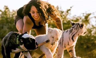 Дівчина подружила тигра і лева зі своїм бульдогом
