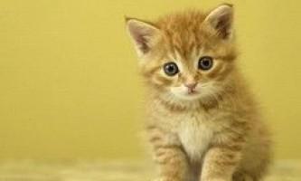 Дівчина ризикнула здоров`ям, щоб врятувати кошеня