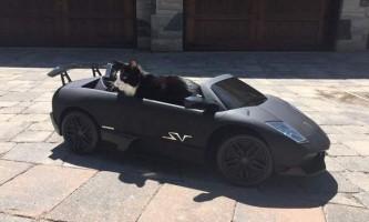 Ді-джей з канади купив коту суперавтомобіль
