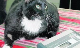 Діабет у кішок і собак