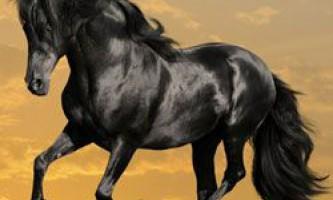 Дикі коні породи мустанг: походження, опис екстер`єру