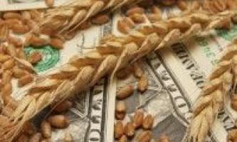Динаміка цін позабіржового зернового ринку україни в перші дні серпня