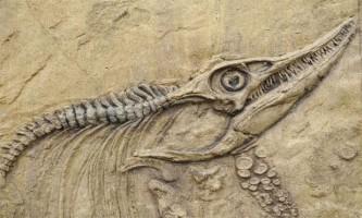 Динозаври були розумнішими, ніж ми думали