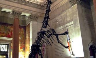 Динозаври з довгою шиєю