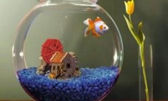 Маленькі акваріумні рибки