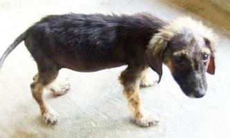 Дніпропетровський пенсіонер створив притулок для собак