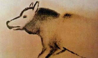 Днк древнього сибірського вовка змусила знову переглянути історію виникнення собак