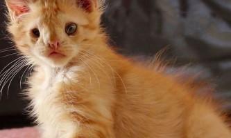 Добрі люди оцінили красу «занадто потворного» кошеня