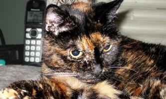 В сша на 28-му році життя померла найстаріша в світі кішка