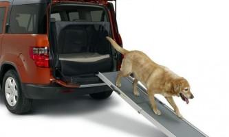 Dog friendly - автомобіль для чотириногого друга
