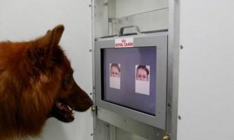 Домашні собаки розуміють людську міміку і посмішку