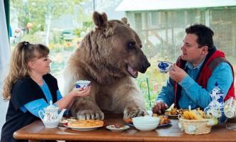 Домашній ведмідь степан підкорив британців