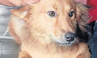 Домашній пес по кличці пуі врятував життя новонародженій дівчинці