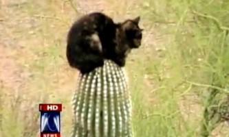 Домашня кішка три дні просиділа на гігантському кактусі