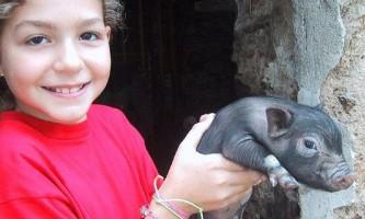 Домашня улюблениця 70-кілограмова чорна свинка на прізвисько чесіра