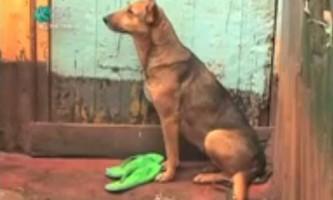 Домашня собака піклується про двох покинутих матір`ю дітей