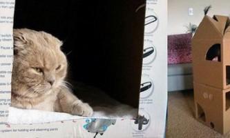 Будиночок для котів і кішок
