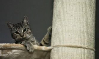 Будиночок-когтеточка для кішки своїми руками