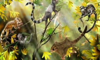 Стародавні вивірковиді істоти змінили уявлення про появу ссавців