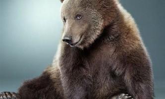 Стародавні китайці приручили ведмедів раніше собак