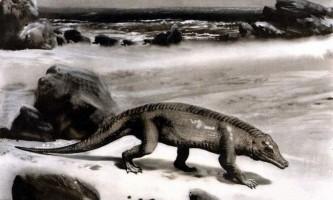Стародавні крокодили