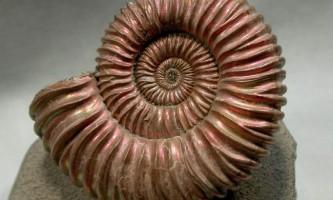 Стародавні тварини: від молюсків до динозаврів