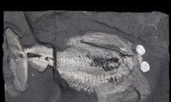 Древній мозок розкрив секрети еволюції голови