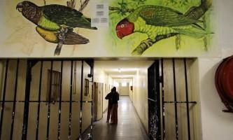 Злочинців перевиховують за допомогою папуг
