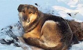 Два тижні пес не відходив від замерзлої подруги