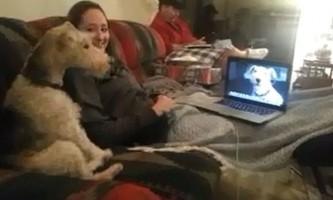 Дві собаки навчилися спілкуватися один з одним по skype