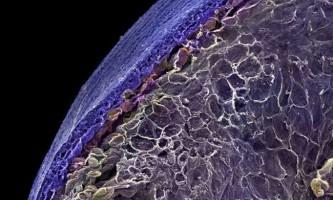Їжа під мікроскопом
