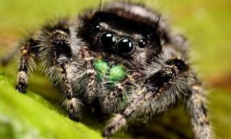 Чи є у павуків слух
