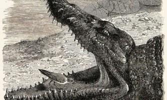 Факти: птахи не чистять зуби крокодилам
