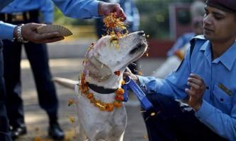 Фестиваль для собак - приклад гуманізму і доброти