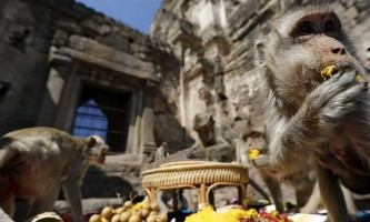 Фестиваль мавп в таїланді пройшов 29 листопада