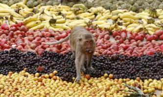 Фестиваль `мавпячий буфет` в таїланді