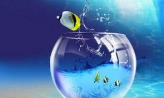 Фільтрація води в акваріумі: методи очищення