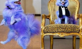 Фіолетова собака заробила шість тисяч фунтів