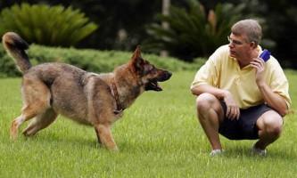 Фізична підготовка собак